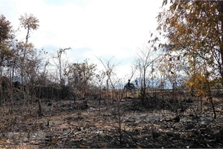 Khanh Hoa: 67,000ha of forest at high risk of fire