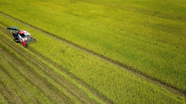 Vietnam's agriculture to be world's top 15 most developed hinh anh 1