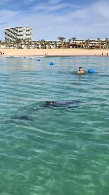 Dolphin stuns beachgoers at Cam Ranh Bay hinh anh 1