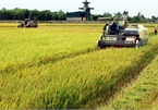 Vietnam eyes place in world's top 10 farm produce processing hubs