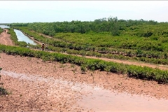 Wetland nature reserve founded in Thai Binh