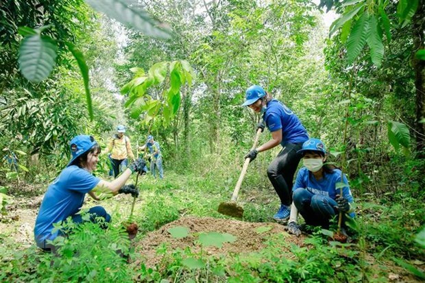 Vietnam ready to carry out REDD+ hinh anh 1
