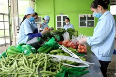 Cambodia yet to issue documents banning import of Vietnamese fruits, vegetables: ministry