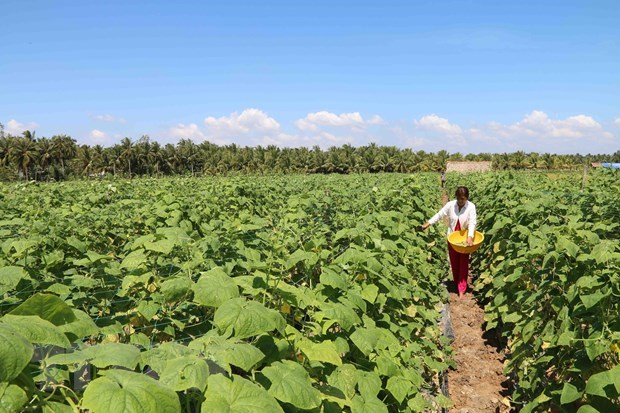 Mekong Delta province to help farmers with 1.7 million USD for drought, saltwater hinh anh 1