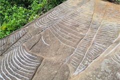 More ancient slabs with engravings of terraced fields found in Yen Bai