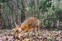 Vietnam enhances cooperation to reduce biodiversity loss