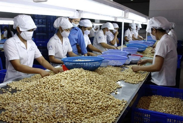 Vietnam remains world's largest producer, exporter of cashew nuts hinh anh 1
