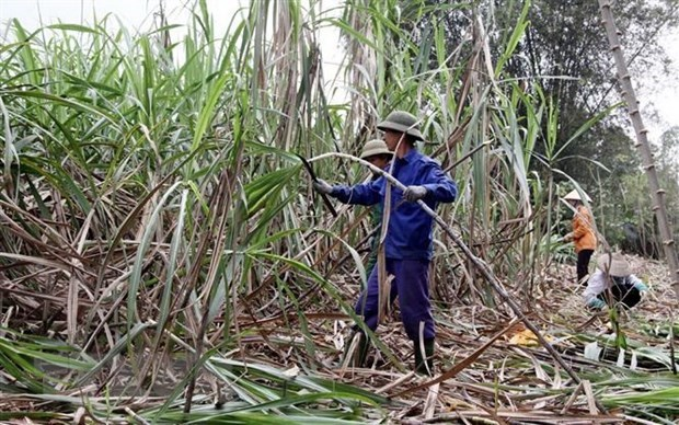 Local sugar industry calls for fair competition hinh anh 1