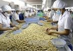 Vietnam remains world's top cashew exporter