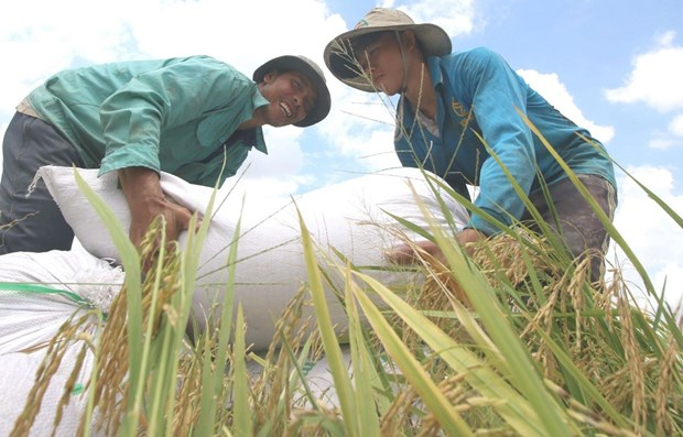 Vietnam listed in high human development category group: UNDP new report hinh anh 1