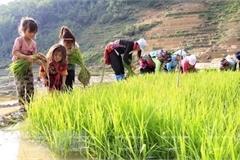 Vietnam's child labour rate 2 percentage points lower than region's average: survey