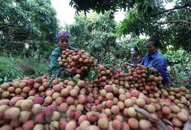 Agricultural sector shows strong performance in tough year: experts hinh anh 1