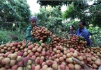 Agricultural sector shows strong performance in tough year: experts