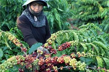 Vietnam exports over 1.7 million tonnes of coffee in 2020