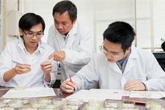 Vietnamese scientist in Japan discovers invasive plant's health benefits