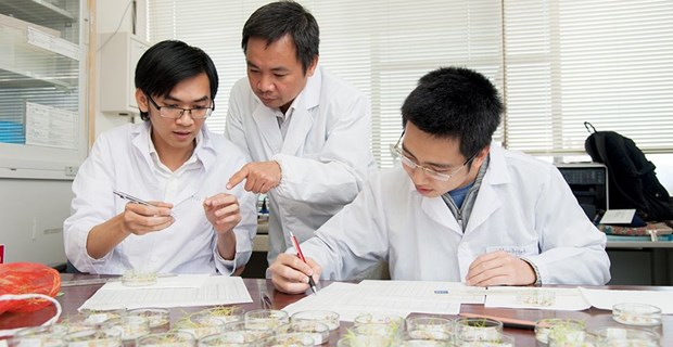 Vietnamese scientist in Japan discovers invasive plant's health benefits hinh anh 1