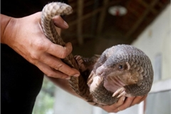 Legal proceedings commenced against endangered animal protection violators