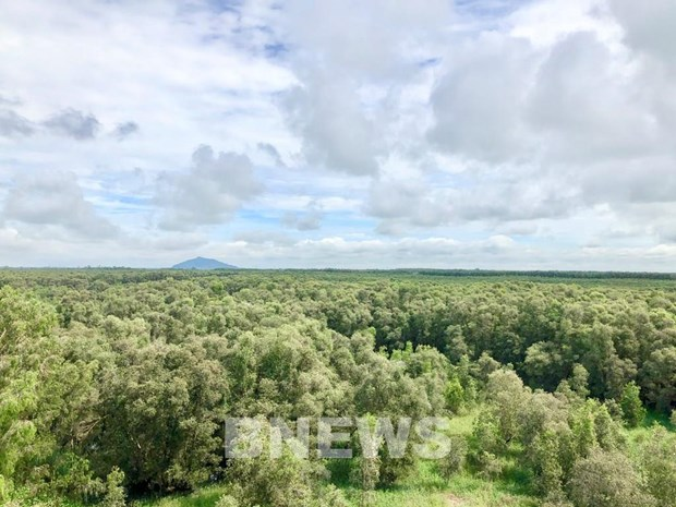 Forest environmental services to bring about 2.8 trillion VND in 2021 hinh anh 1