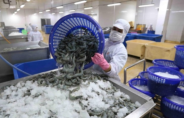 US's removal of anti-dumping duties on Minh Phu frozen shrimp a fair decision: MoIT hinh anh 1