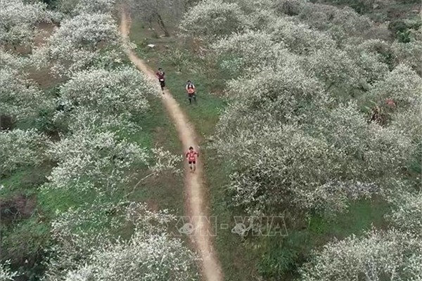 Nearly 4,300 runners to compete at Vietnam Trail Marathon in Son La