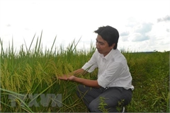 PAN Group entrusted with protection of ST24 and ST25 rice trademarks in int'l markets