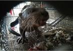 Wildlife trafficking in Vietnam remains complex: report