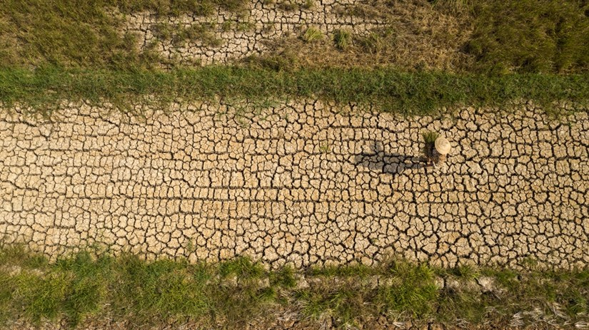 Mekong Delta locals respond to drought and saltwater intrusion hinh anh 1