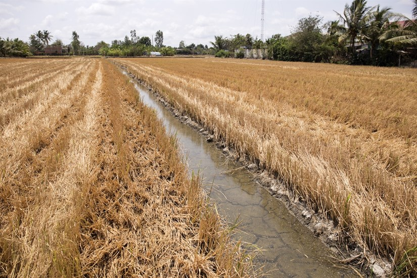 Mekong Delta locals respond to drought and saltwater intrusion hinh anh 2