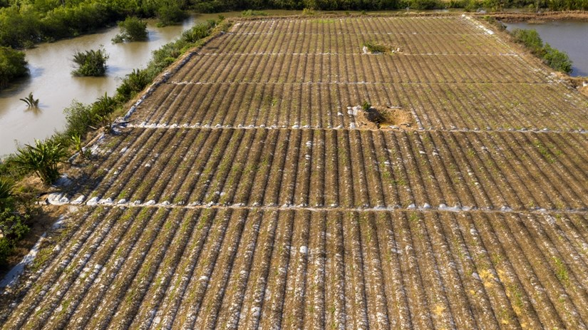Mekong Delta locals respond to drought and saltwater intrusion hinh anh 4