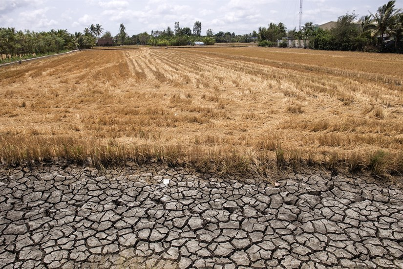 Mekong Delta locals respond to drought and saltwater intrusion hinh anh 6