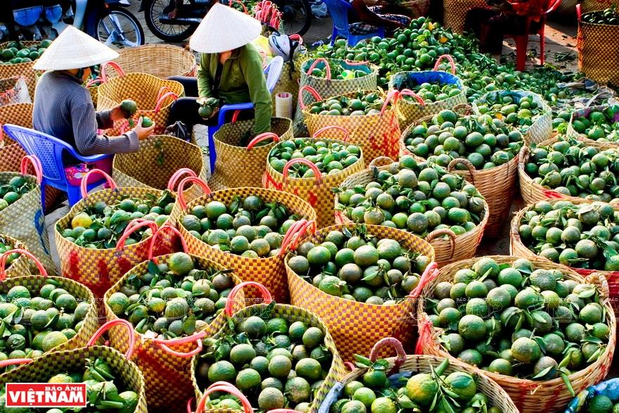 Thoi Son islet is a diverse fruit supply source for many wholesale markets in Tien Giang province (Photo: VNA)