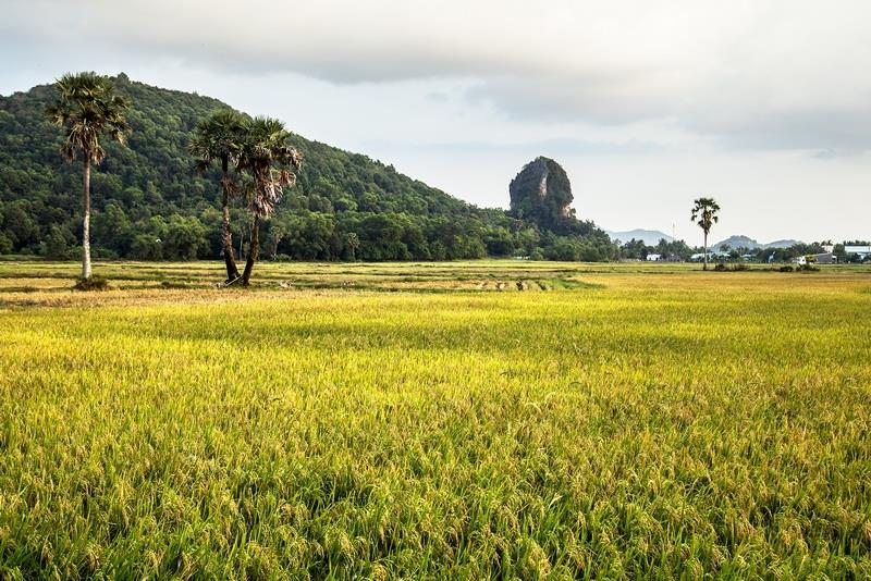 About 5 km from Ha Tien, Thach Dong mountain is uniquely shaped (Photo: VNA)