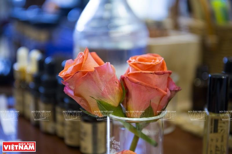 Roses are used for fragrance extraction (Photo:VNA/VNP)