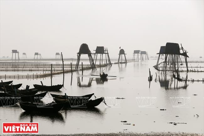 "Boasting vast clam farming fields, Tien Hai is called by northern delta fishermen as the cradle of ""villages on the sea"" (Photo: VNA)"