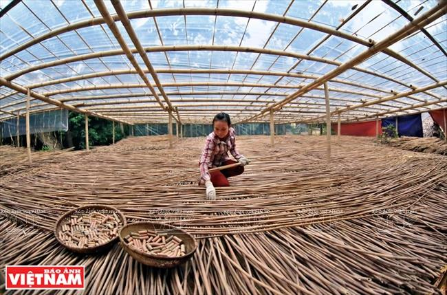Le Xuan Hoa decided to build Hon Mu farm with the philosophy that all plants from wild grasses to perennial trees have their own value (Photo: VNA)