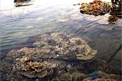 Ban hành Quy chế phối hợp quản lý thực hiện Chương trình trọng điểm điều tra cơ bản tài nguyên, môi trường biển và hải đảo