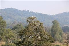 Chấn chỉnh, rà soát số liệu cập nhật và công bố hiện trạng rừng năm 2020