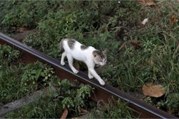 """Mèo """"buôn lậu ma túy"""" trốn thoát khỏi nhà tù Sri Lanka"""