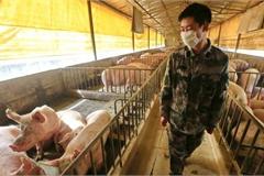 Nguy cơ gây đại dịch của virus mới phát hiện tại Trung Quốc