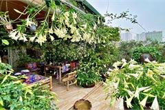 Bà mẹ Hà Nội 'chịu chơi', cắm 2000 bông loa kèn phủ trắng vườn sân thượng