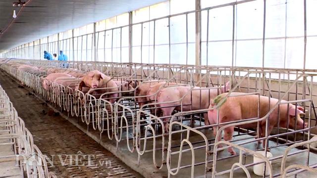Cho heo ăn ngủ trong chuồng lạnh, nông dân Đồng Nai khỏe ru - Ảnh 1.