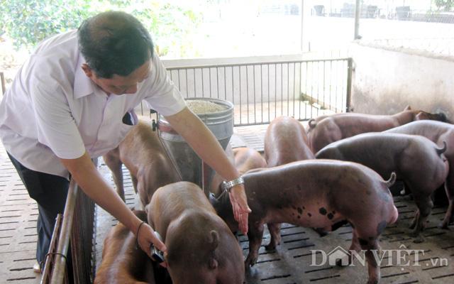 Cho heo ăn ngủ trong chuồng lạnh, nông dân Đồng Nai khỏe ru - Ảnh 4.