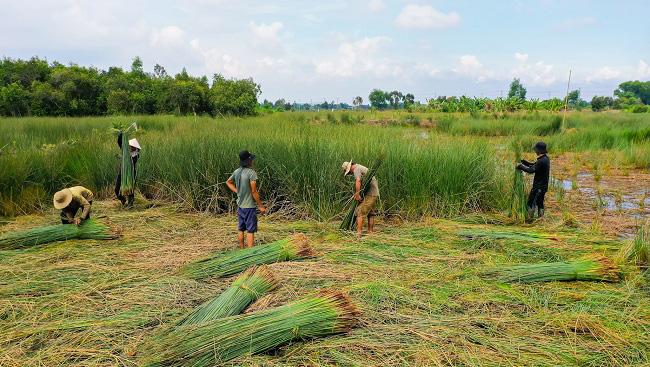 Biến cỏ dại thành ống hút xuất khẩu doanh thu trăm tỷ - Ảnh 4.