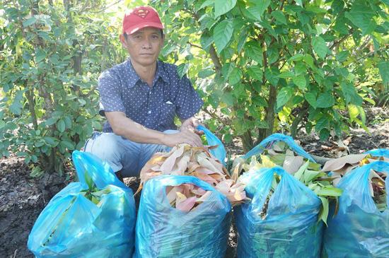 Tây Ninh: Đem thứ cây rừng về vườn trồng như rau, nhà hàng, siêu thị đăt mua tới tấp, nông dân ở đây đổi đời - Ảnh 1.
