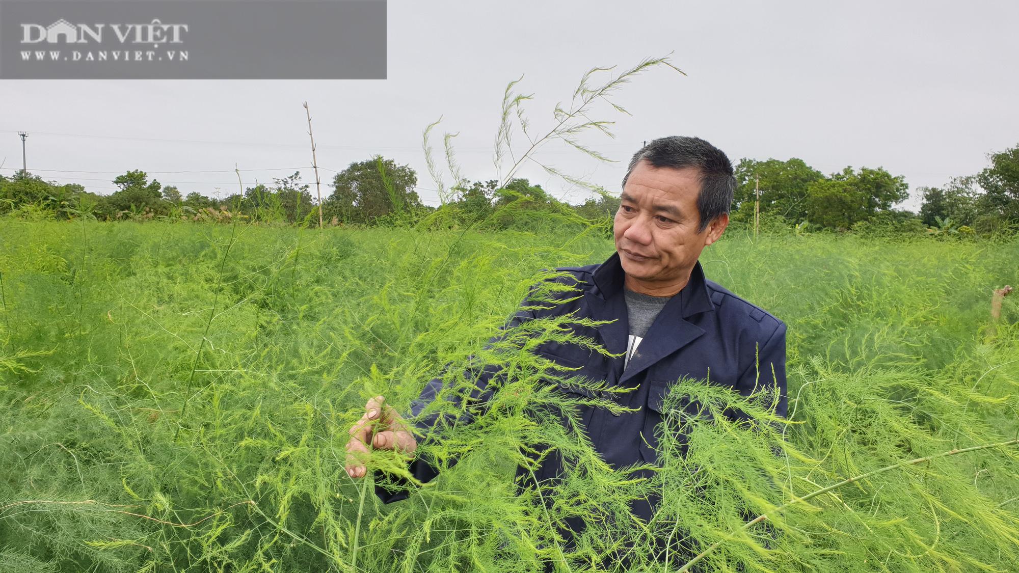Nam Định: Ra giữa đảo trồng măng tây, lão nông bỏ túi hàng chục triệu đồng/tháng. - Ảnh 7.