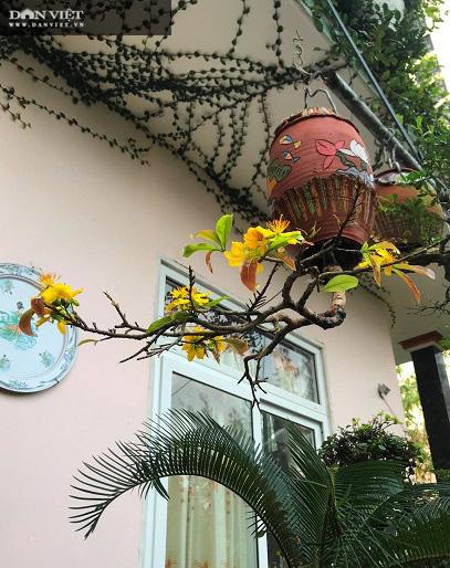 Dị nhân ở Quảng Nam có hàng trăm cây bonsai ngược được xác nhận kỷ lục Việt Nam - Ảnh 9.