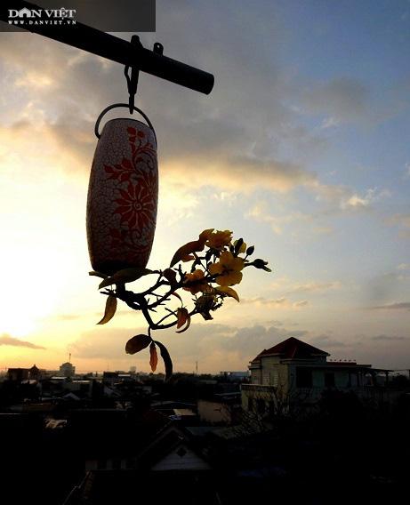 Dị nhân ở Quảng Nam có hàng trăm cây bonsai ngược được xác nhận kỷ lục Việt Nam - Ảnh 10.