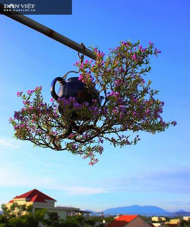 Dị nhân ở Quảng Nam có hàng trăm cây bonsai ngược được xác nhận kỷ lục Việt Nam - Ảnh 1.