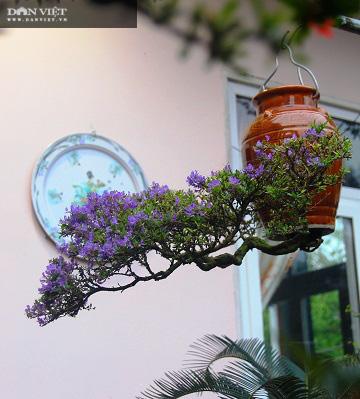 Dị nhân ở Quảng Nam có hàng trăm cây bonsai ngược được xác nhận kỷ lục Việt Nam - Ảnh 12.