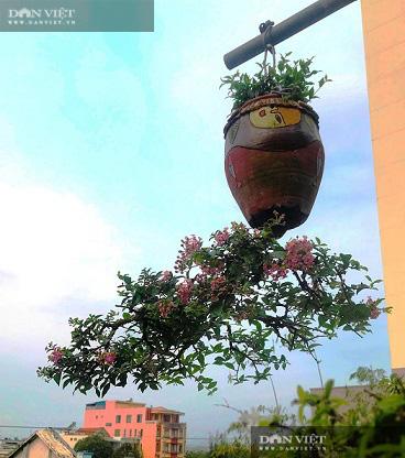 Dị nhân ở Quảng Nam có hàng trăm cây bonsai ngược được xác nhận kỷ lục Việt Nam - Ảnh 13.